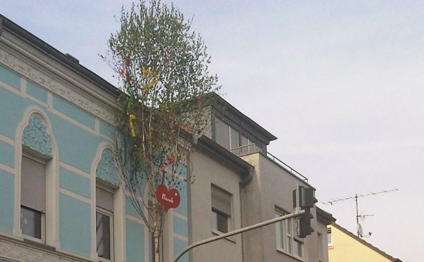 Der Maibaum für die Liebste!